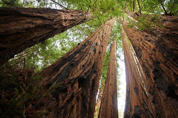 Allie-Caulfield-tall-trees.jpg